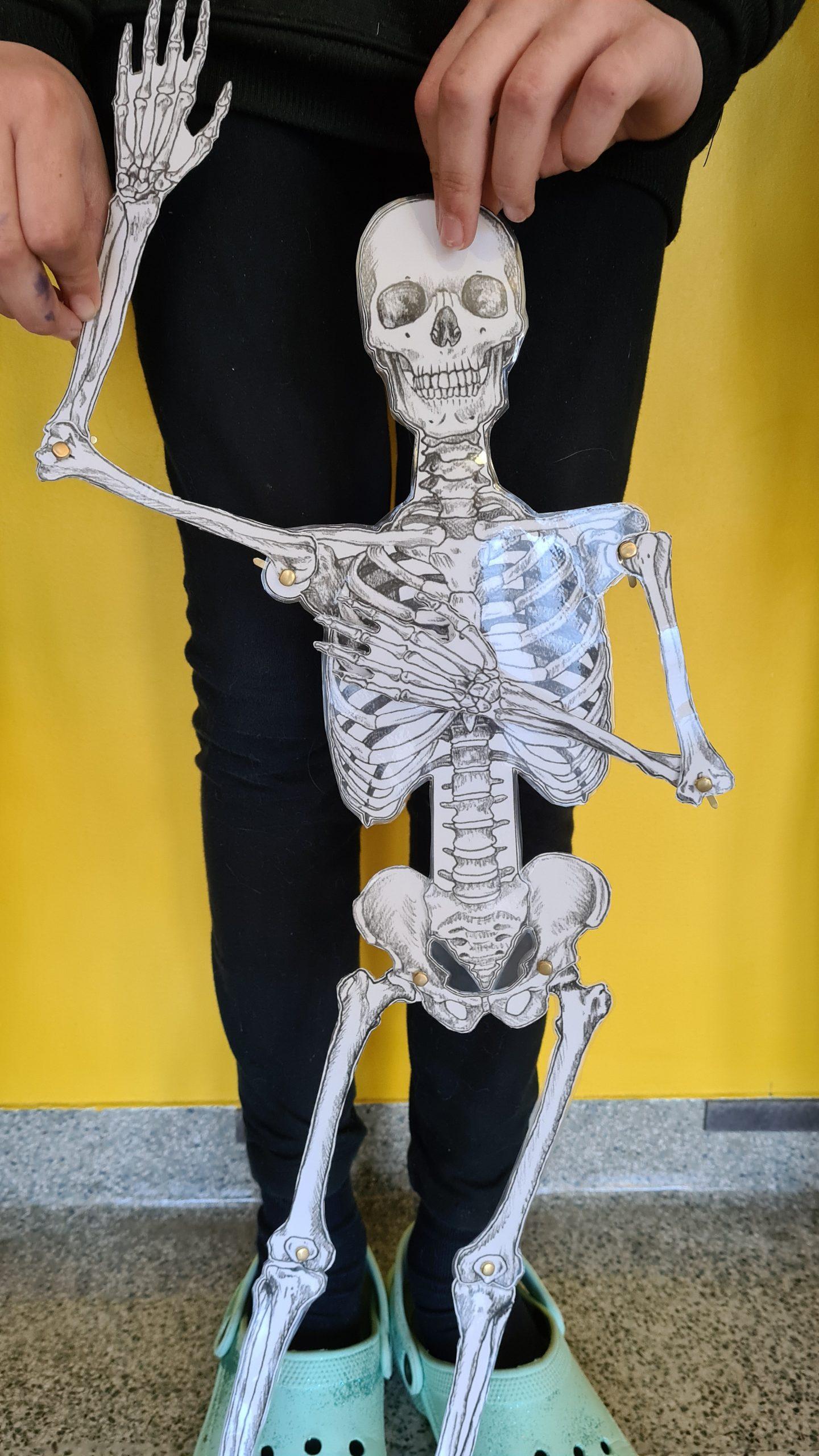 Gerüstbau des Körpers